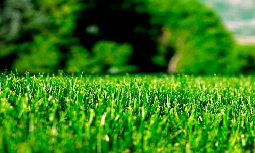 стоимость газона