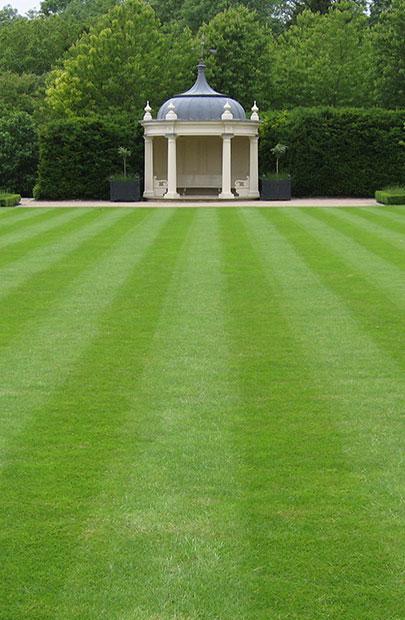 газонная трава киев