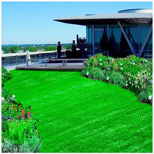 зеленая крыша oasis